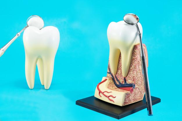 tooth-anatomy-blue_60829-519